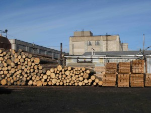 фото: производство дубового бруса