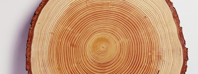 Фото: древесина лиственницы
